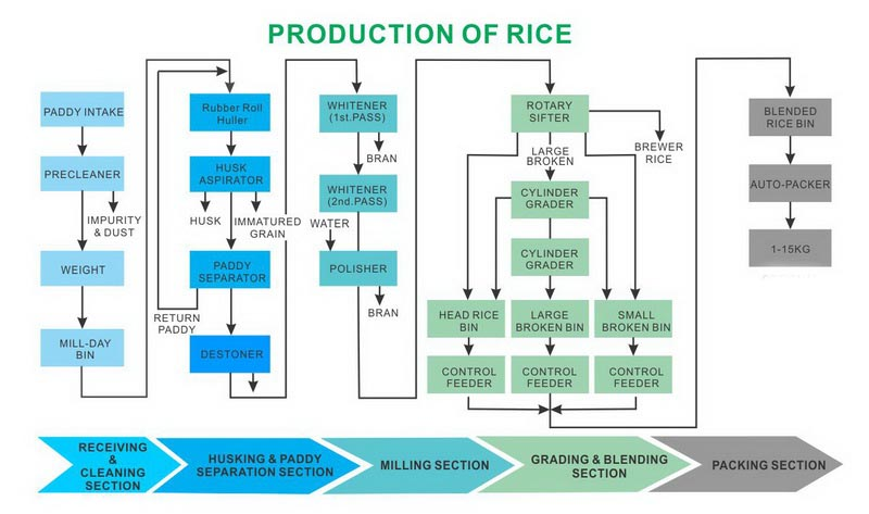 Rice Farming Process